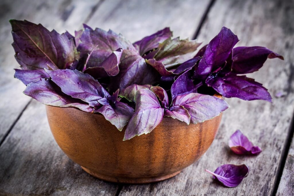 Bunch of purple basil leaves in a bowl in an article about how to grow basil from seed